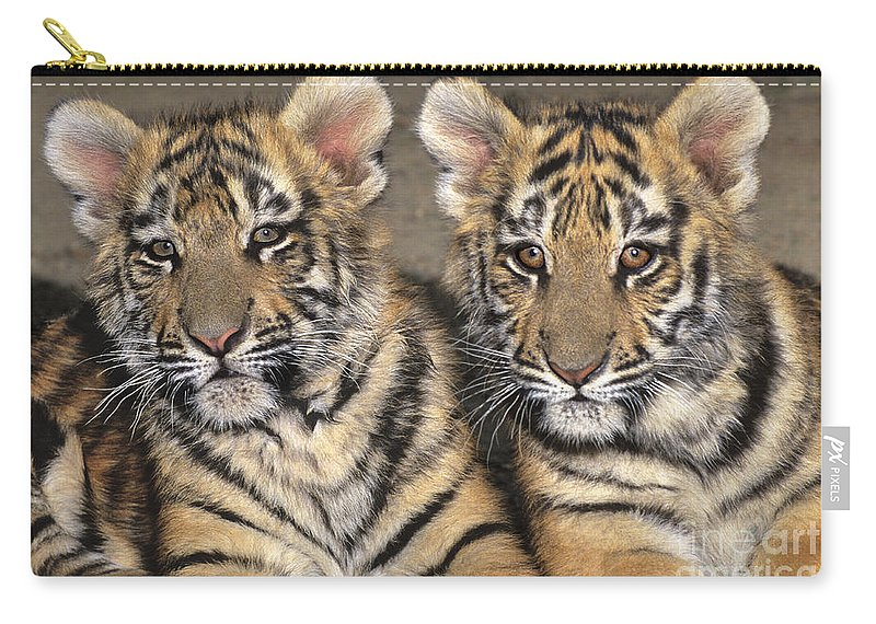 Bengal Tigers Carry-all Pouch featuring the photograph Little Angels Bengal Tigers Endangered Wildlife Rescue by Dave Welling