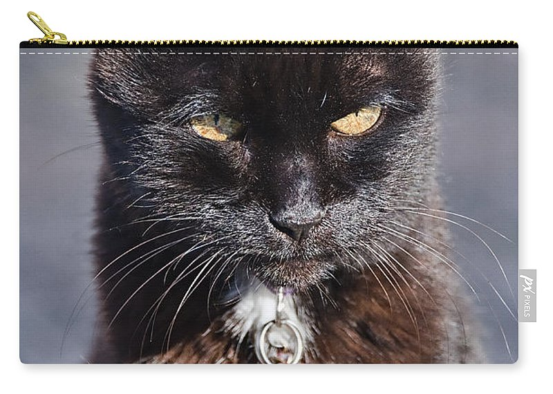 Cat Carry-all Pouch featuring the photograph Little Black Kitty by Susie Peek