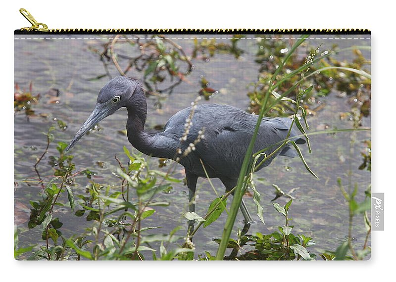 Heron Carry-all Pouch featuring the photograph Little Blue Heron - Waiting For Prey by Christiane Schulze Art And Photography