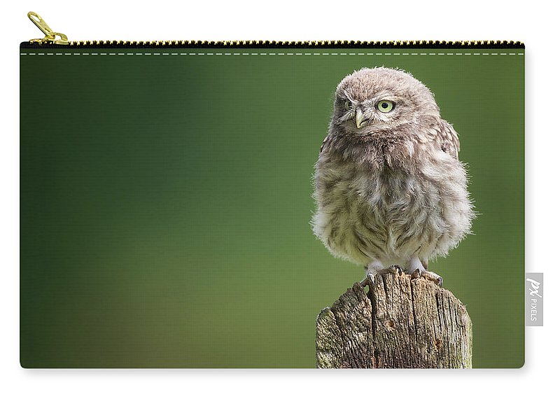 Owlet Carry-all Pouch featuring the photograph Little Fuzzy by Markbridger