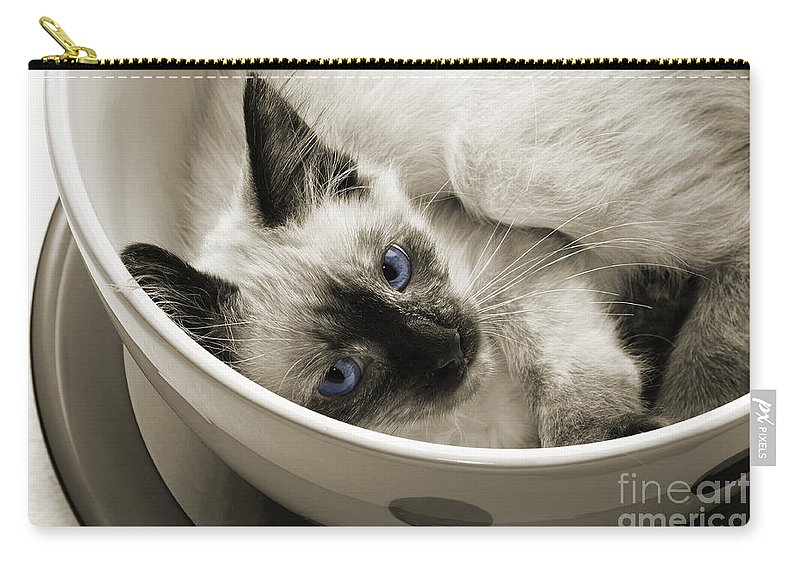 Andee Design Cats Carry-all Pouch featuring the photograph Little Miss Blue Eyes B W by Andee Design