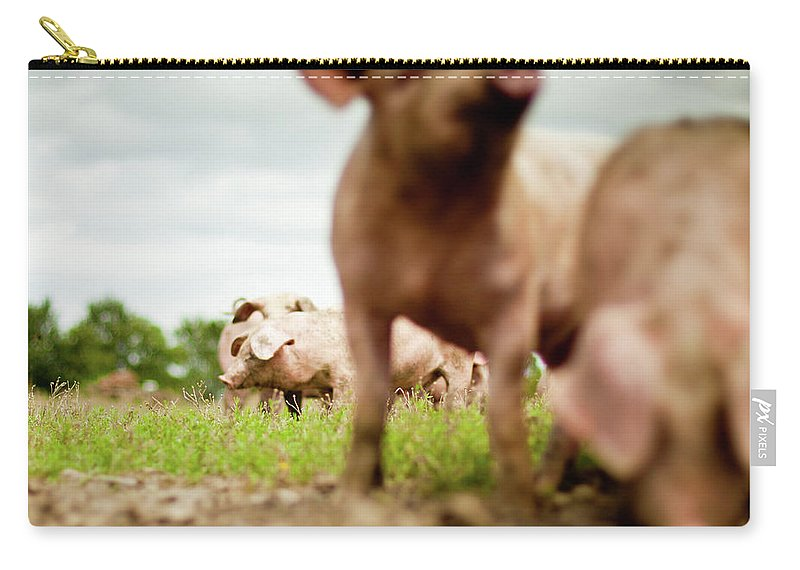 Pig Carry-all Pouch featuring the photograph Little Pigs by Emmanuelle Brisson