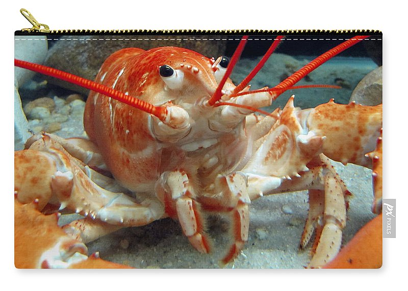 Seafood Carry-all Pouch featuring the photograph Lobster by Bob Slitzan