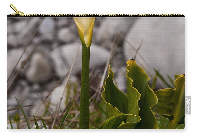 White Flower Carry-all Pouch featuring the photograph Lone Calla Lily by Melinda Ledsome