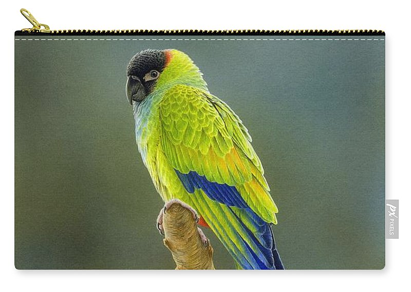 Bird Illustrations Carry-all Pouch featuring the painting Lone Star - Nanday Conure by Frances McMahon
