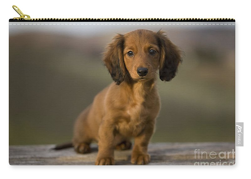 d4500e547 Long-haired Dachshund Puppy Carry-all Pouch for Sale by Jean-Michel Labat