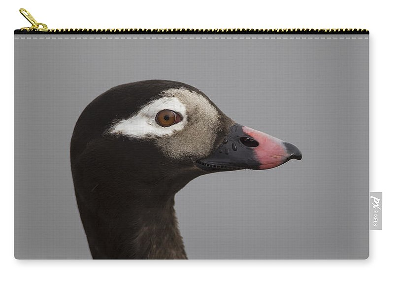 Doug Lloyd Carry-all Pouch featuring the photograph Longtailed Duck by Doug Lloyd