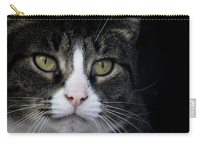 Eyes Carry-all Pouch featuring the photograph Look At Me by Jatinkumar Thakkar