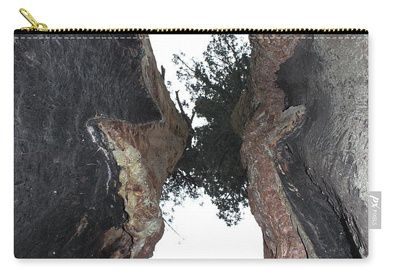 Calaveras Big Trees State Park Carry-all Pouch featuring the photograph Look Up Between The Trees by Donna Jackson