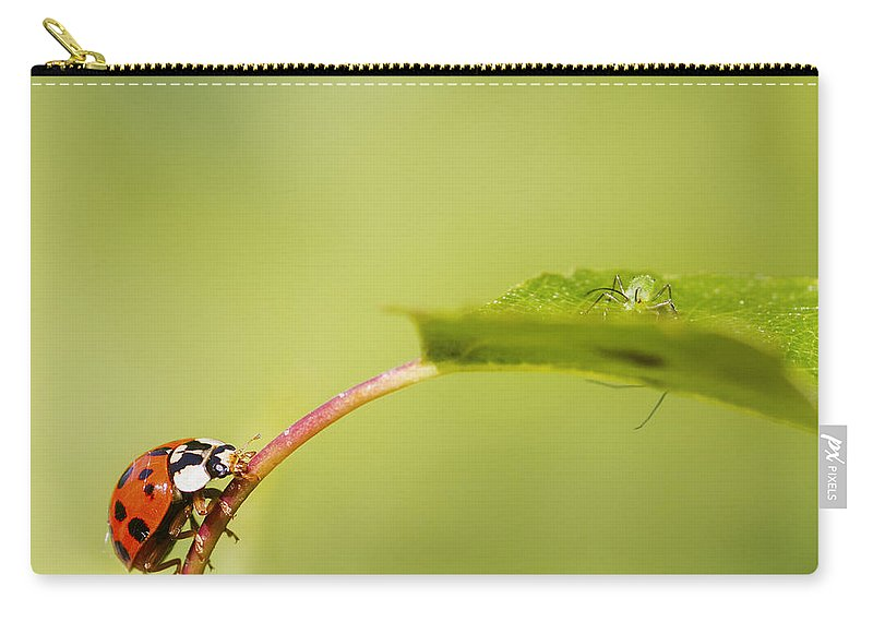 Nature Carry-all Pouch featuring the photograph Looking For Dinner by Chris Smith