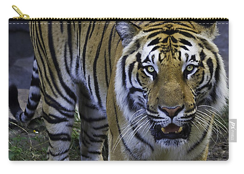Tigers Carry-all Pouch featuring the photograph Looking For Lunch by Ken Frischkorn