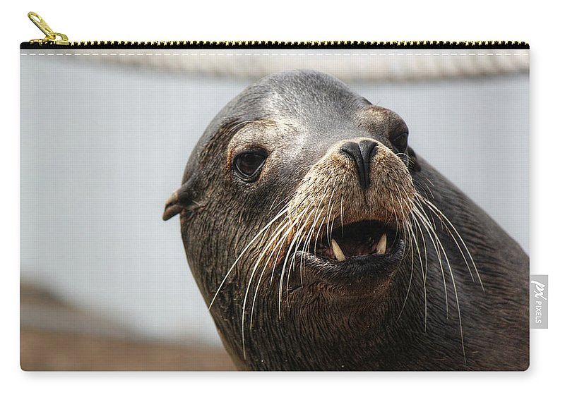 Seals. Seal Carry-all Pouch featuring the photograph Looking For The Ladies by Melanie Lankford Photography