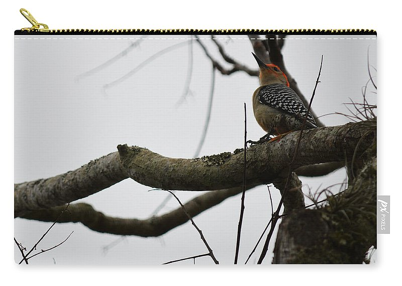 Florida Carry-all Pouch featuring the photograph Looking Up by Linda Kerkau