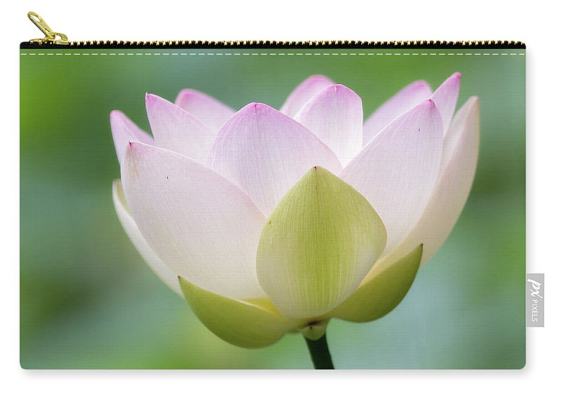 Petal Carry-all Pouch featuring the photograph Lotus Flower by Koyaginomari
