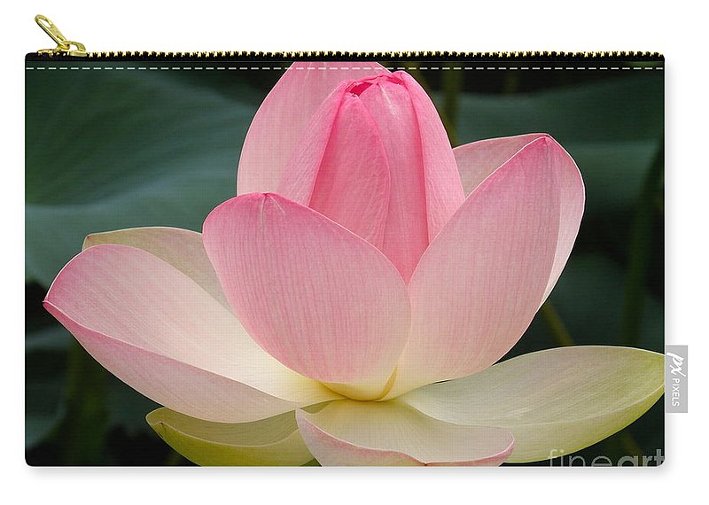 Lotus Blossom Carry-all Pouch featuring the photograph Lotus In Bloom by Byron Varvarigos