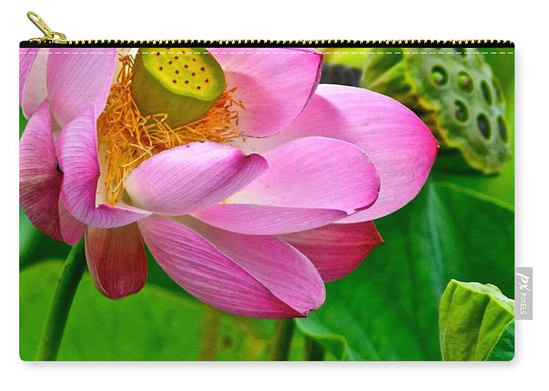 Lotus Carry-all Pouch featuring the photograph Lotus by Frozen in Time Fine Art Photography