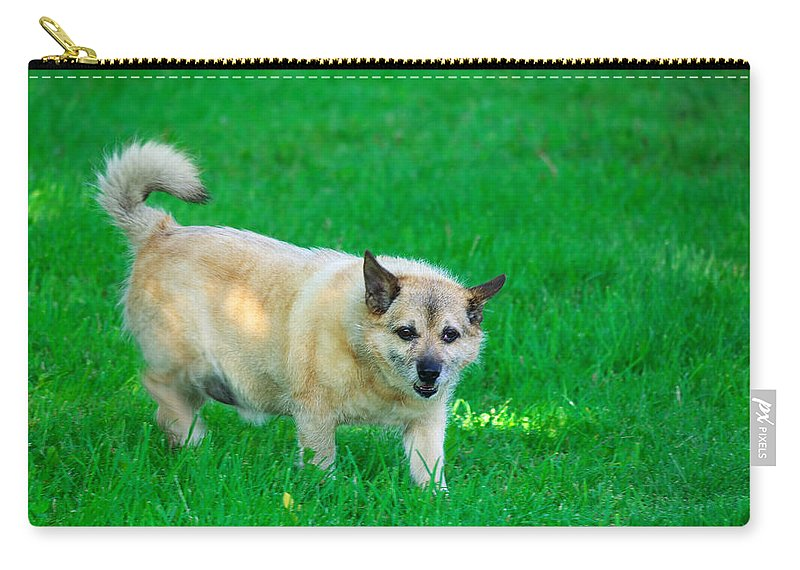 Dog Carry-all Pouch featuring the photograph Luksi by Ivan Slosar