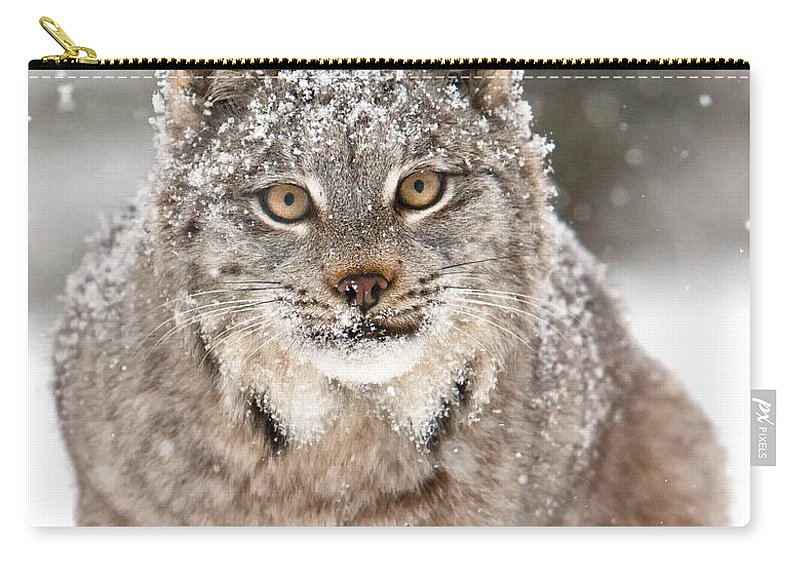 Animal Carry-all Pouch featuring the photograph Lynx Stare by Jerry Fornarotto