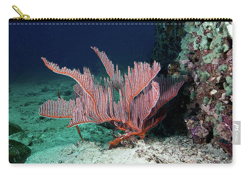 Underwater Carry-all Pouch featuring the photograph Lyre Gorgonian, Harp Coral by Gerard Soury