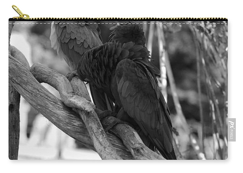 Macaws Carry-all Pouch featuring the photograph Macaws Of Color B W 15 by Rob Hans