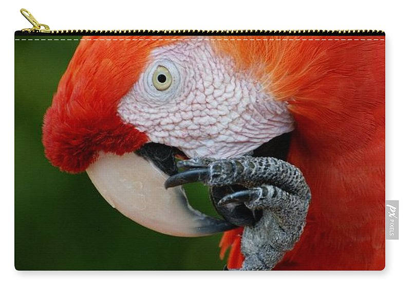 Macaws Carry-all Pouch featuring the photograph Macaws Of Color32 by Rob Hans