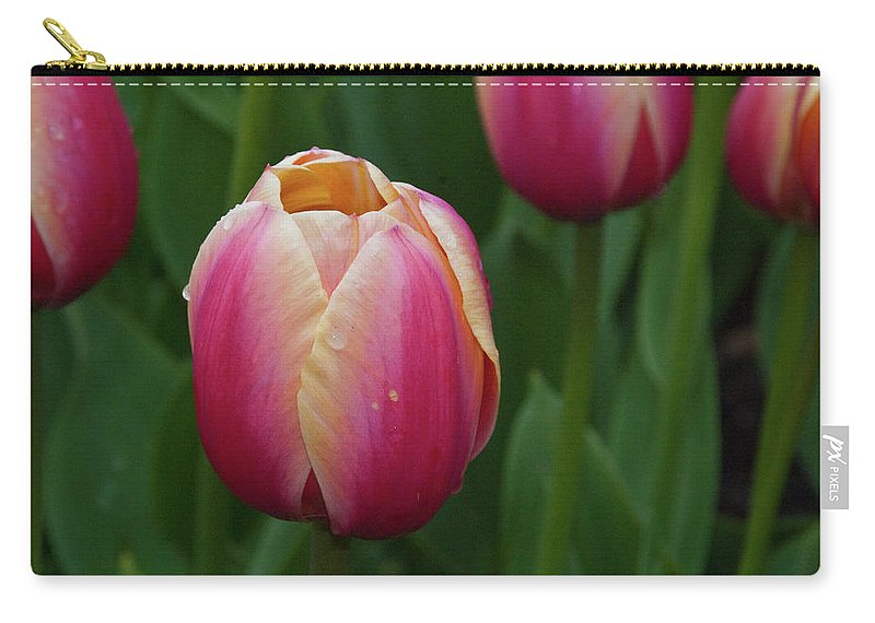 Flowers Carry-all Pouch featuring the photograph Mackinac Tulip 10386 by Guy Whiteley