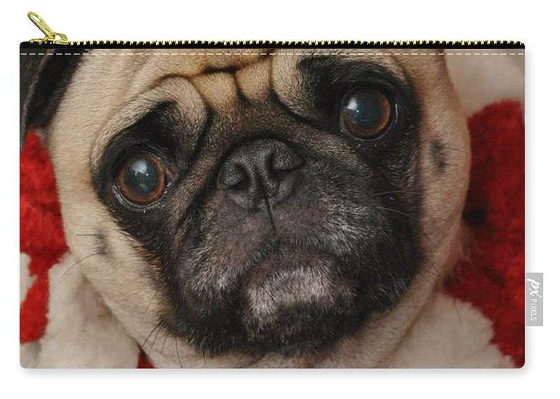Dog Carry-all Pouch featuring the photograph Maggie Girl by Trish Tritz