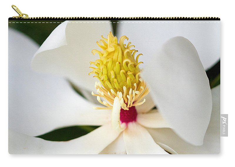 Magnolia Blossom Carry-all Pouch featuring the photograph Magnolia Blossom 1 by Dan Wells