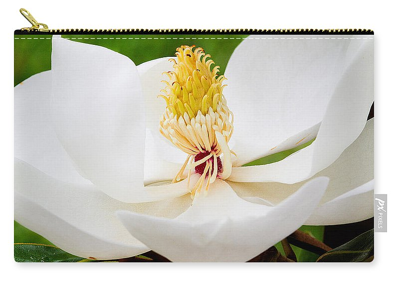 Magnolia Blossom Carry-all Pouch featuring the photograph Magnolia Blossom 2 by Dan Wells