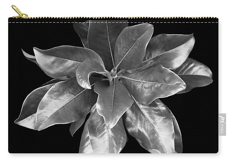 Magnolia Carry-all Pouch featuring the photograph Magnolia Tree Leaves by Marilyn Hunt