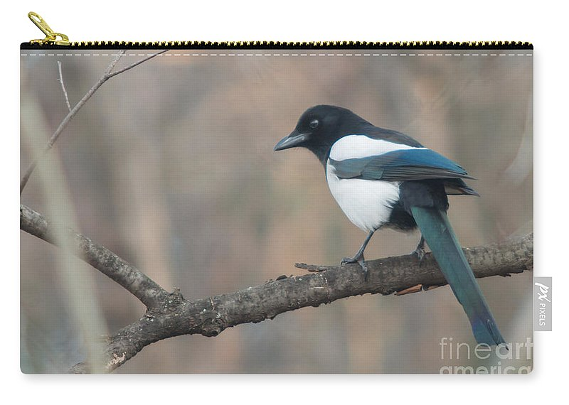 Birds Carry-all Pouch featuring the photograph Magpie Perched On Twig by Jivko Nakev