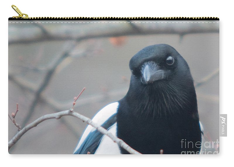 Birds Carry-all Pouch featuring the photograph Magpie Portrait by Jivko Nakev