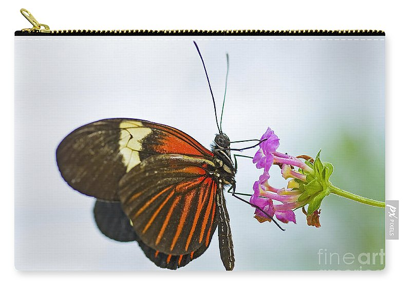Butterfly Carry-all Pouch featuring the photograph Malay Lacewing by Nick Boren