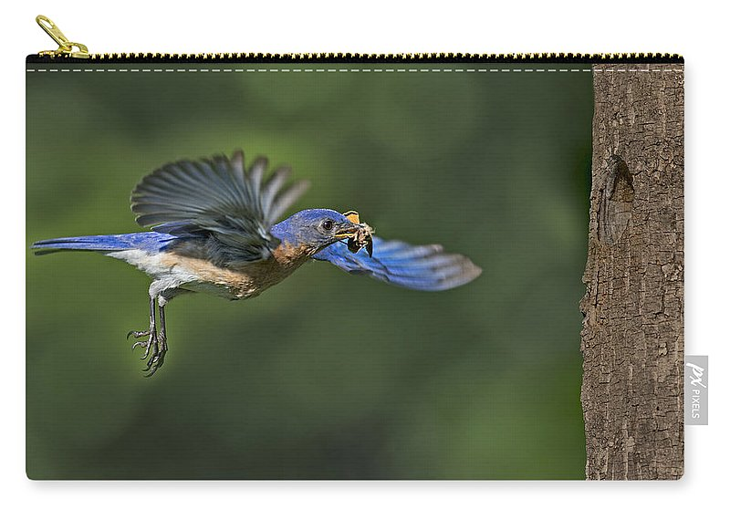 Eastern Bluebird Carry-all Pouch featuring the photograph Male Eastern Bluebird by Susan Candelario