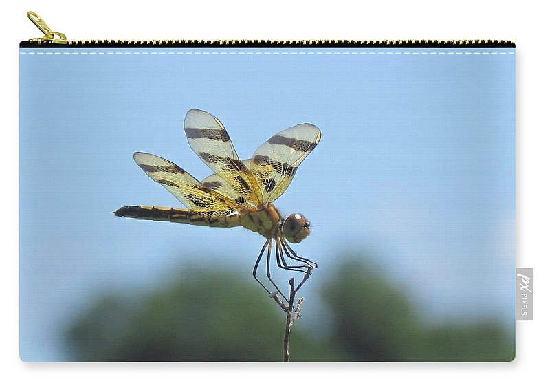 Dragonflies Carry-all Pouch featuring the photograph Male Halloween Pennant by Eric Noa