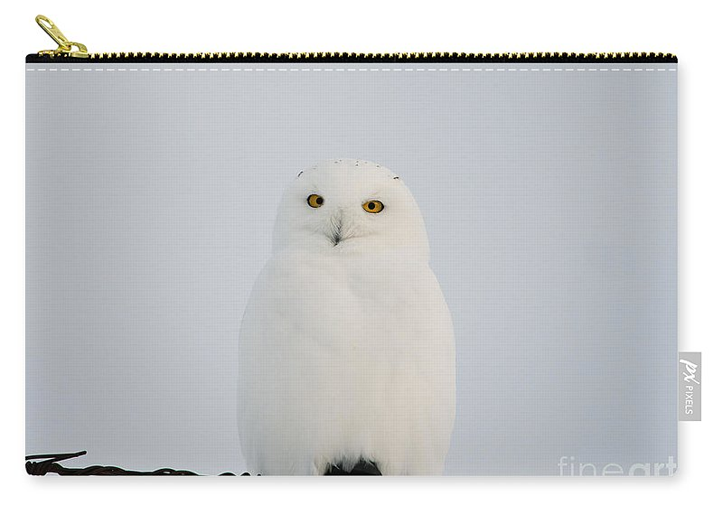 Snowy Owl Carry-all Pouch featuring the photograph Male Snowy Owl by Shannon Carson