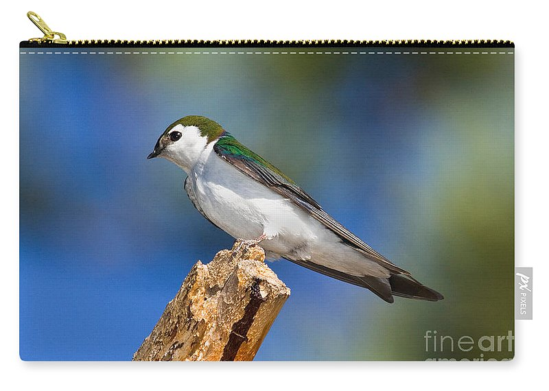 Animal Carry-all Pouch featuring the photograph Male Violet-green Swallow by Anthony Mercieca