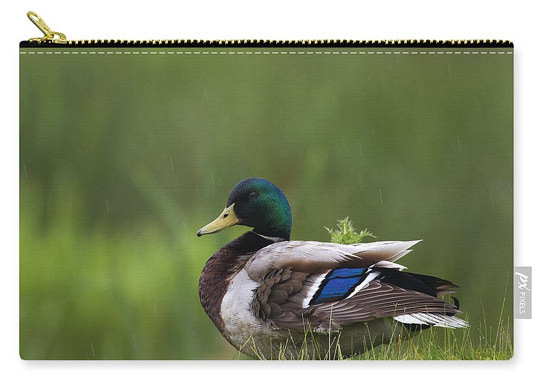 Duck Carry-all Pouch featuring the photograph Mallard Duck by Chris Smith