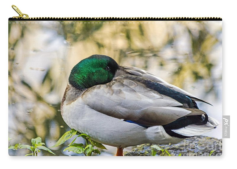Anas Platyrhynchos Carry-all Pouch featuring the photograph Mallard Napping by Kate Brown