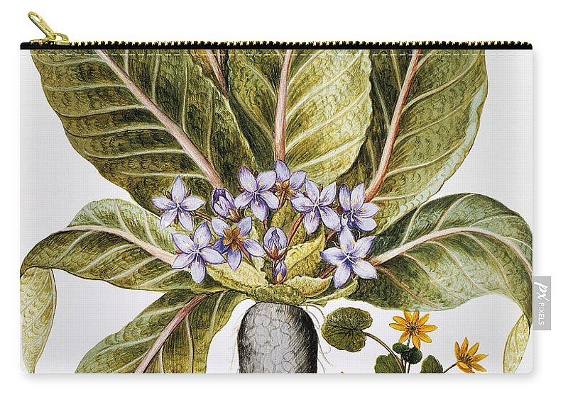 1613 Carry-all Pouch featuring the photograph Mandrake And Buttercup by Granger