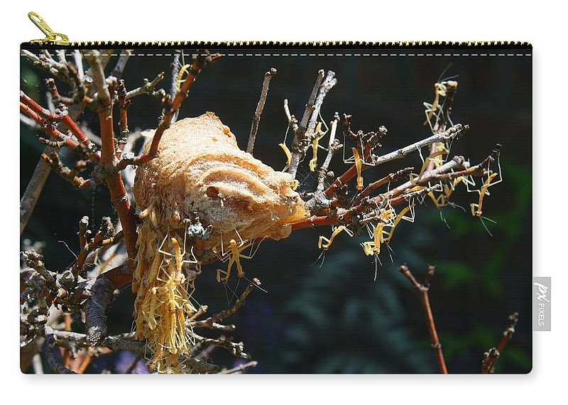 Mantis Carry-all Pouch featuring the photograph Mantids Hatch by Kathryn Meyer