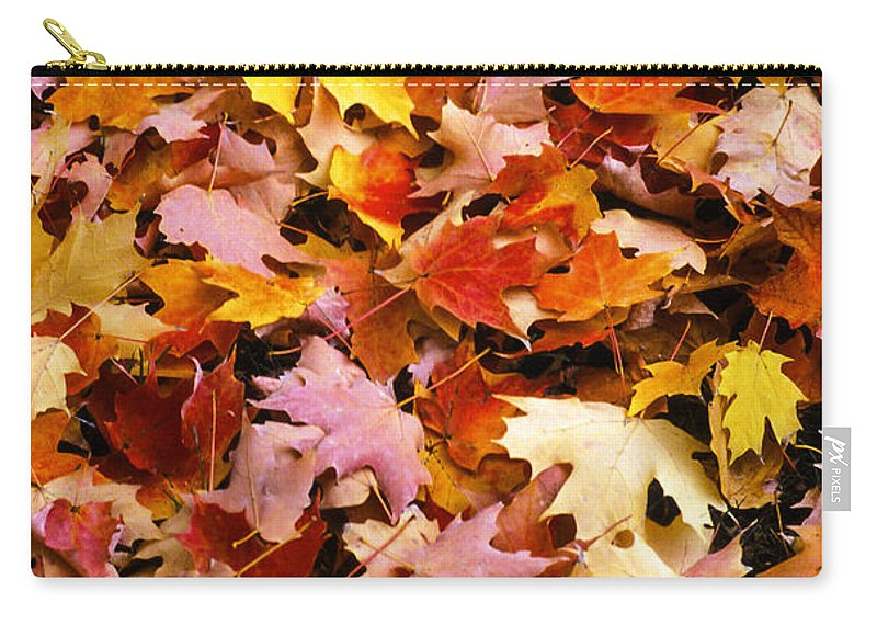 Robert Treman State Park New York Maple Leaves Colored Leaf Autumn Fall Carry-all Pouch featuring the photograph Maple Leaves by Bob Phillips