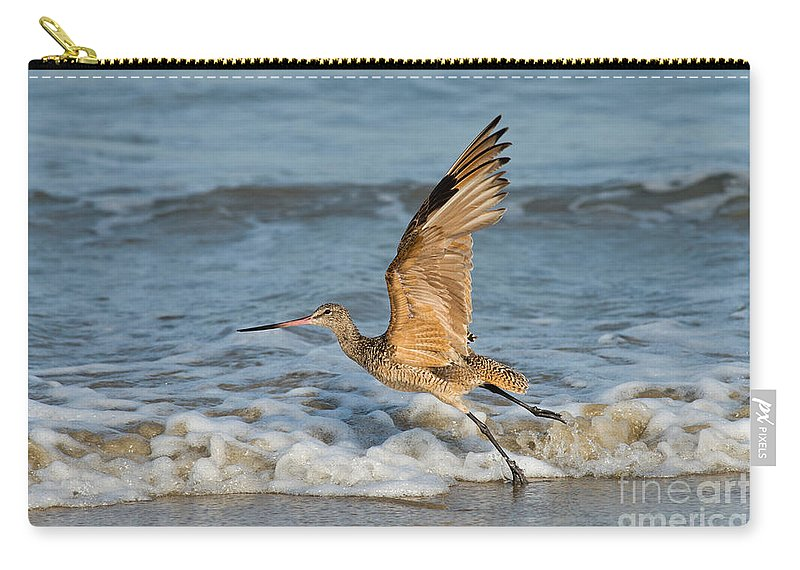Marbled Godwit Carry-all Pouch featuring the photograph Marbled Godwit Taking Off On Beach by Anthony Mercieca