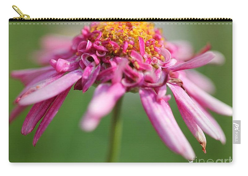 Mccombie Carry-all Pouch featuring the photograph Marguerite Daisy Named Summer Song Rose by J McCombie