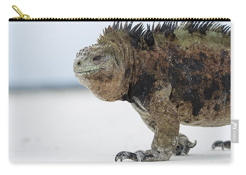 Tui De Roy Carry-all Pouch featuring the photograph Marine Iguana Male Turtle Bay Santa by Tui De Roy