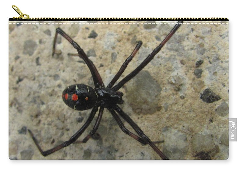 Maryland Black Widow Spider Images Photograph Prints Venomous Spider Images Deadly Spider Photograph Prints Poisonous Spider Prints Critter Prints Killer Spider Prints Carry-all Pouch featuring the photograph Maryland Black Widow by Joshua Bales