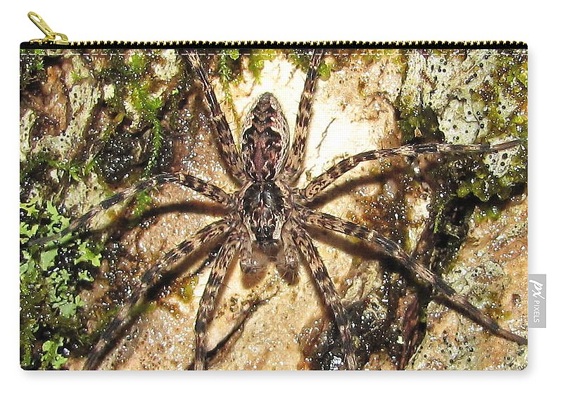 Maryland Brown Fishing Spider Images Hunting Spider Images Maryland Arachnid Images Maryland Spider Photograph Prints Spider On Lichens And Moss Images Purple And Brown Spider Pictures Entomology Forest Ecology Oldgrowth Forest Biodiversity Nature Carry-all Pouch featuring the photograph Brown Fishing Spider by Joshua Bales