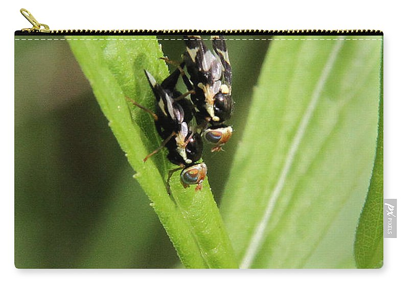 Urophora Cardui Carry-all Pouch featuring the photograph Mating Fruit Flies by Doris Potter