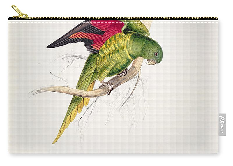 Maton Carry-all Pouch featuring the painting Matons Parakeet by Edward Lear