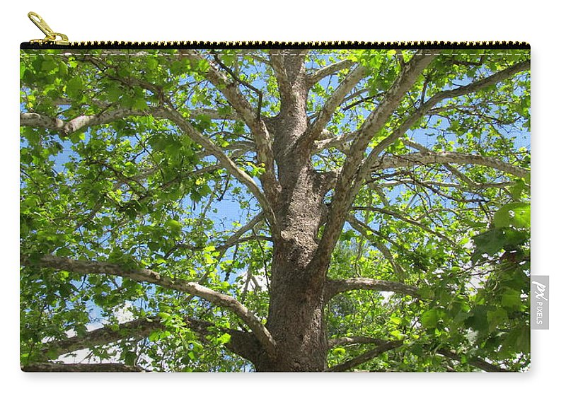 Mature Sycamore Tree Images Old Growth Sycamore Tree Photographs Giant Sycamore Tree Pics Big Sycamore Tree Large Sycamore Tree Old Growth Flora Old Growth Trees Sycamore Canopy Green Trees Forest Canopy Blue Sky Trees Big Trees Old Trees Carry-all Pouch featuring the photograph Mature Sycamore by Joshua Bales